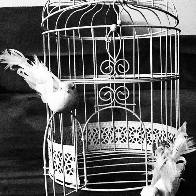 Geschenke- Brief- Geldbox Vogelkäfig weiß